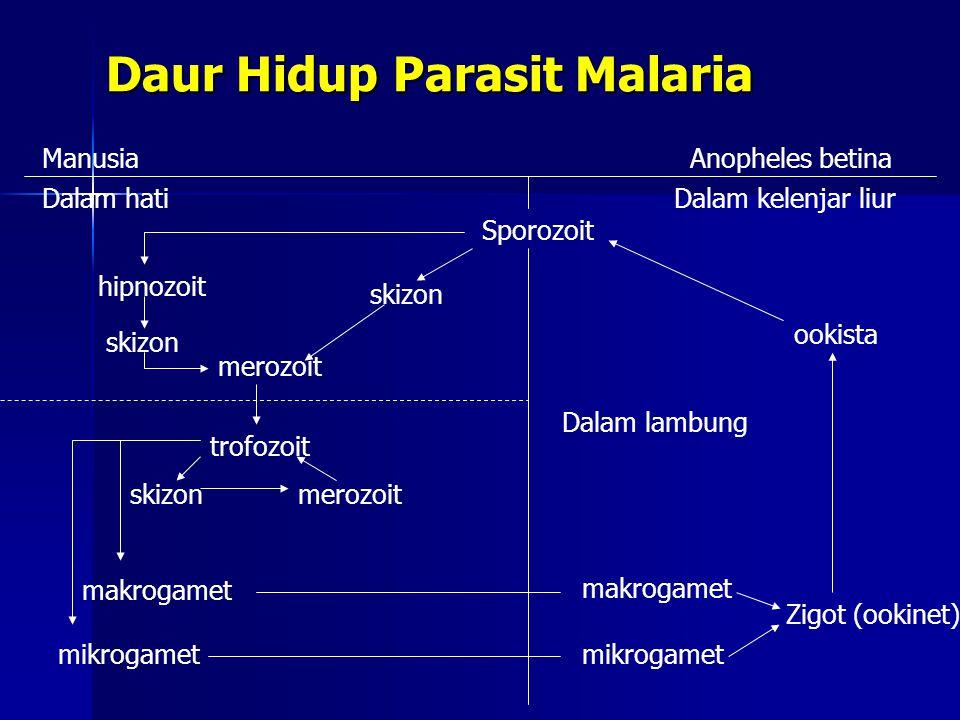 Daur Hidup Parasit Malaria
