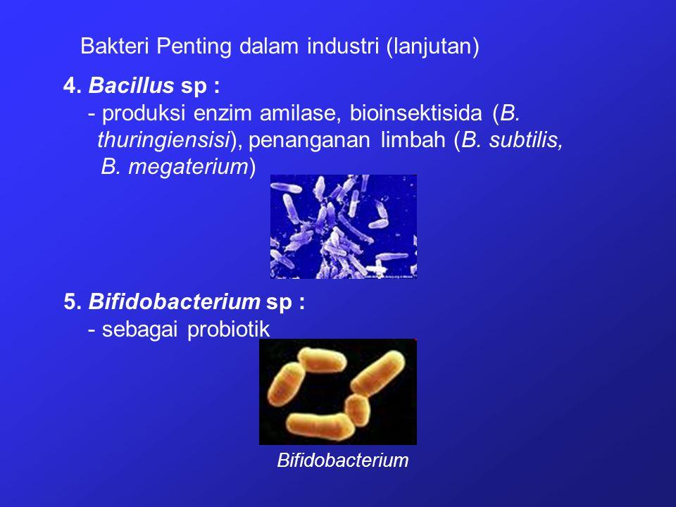 Bakteri Penting dalam industri (lanjutan)
