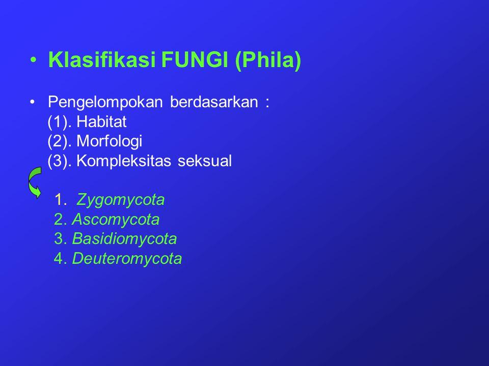 Klasifikasi FUNGI (Phila)