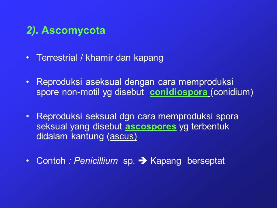 2). Ascomycota Terrestrial / khamir dan kapang