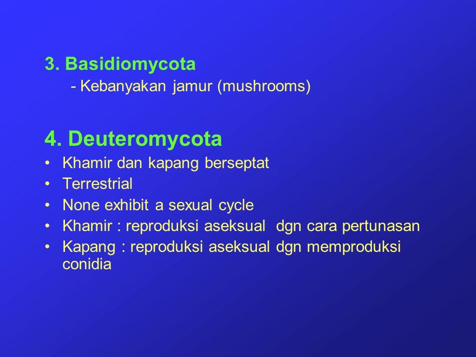 4. Deuteromycota 3. Basidiomycota - Kebanyakan jamur (mushrooms)