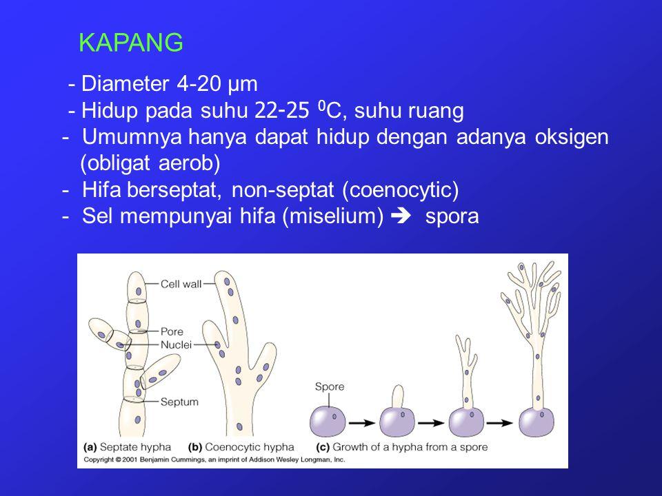 KAPANG - Diameter 4-20 µm - Hidup pada suhu 22-25 0C, suhu ruang