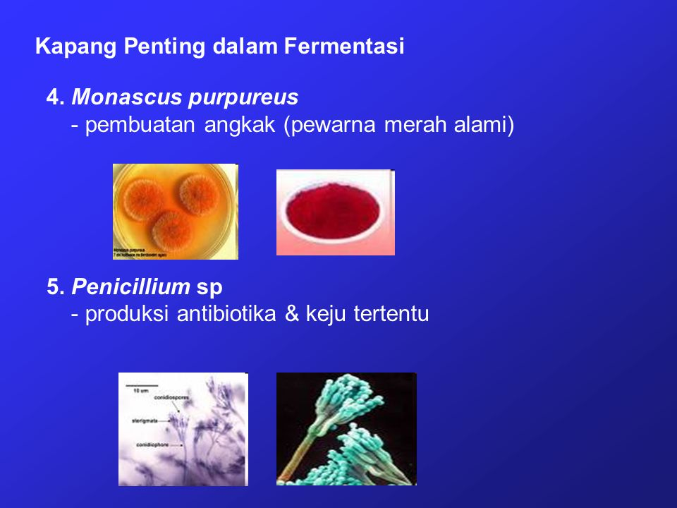 Kapang Penting dalam Fermentasi