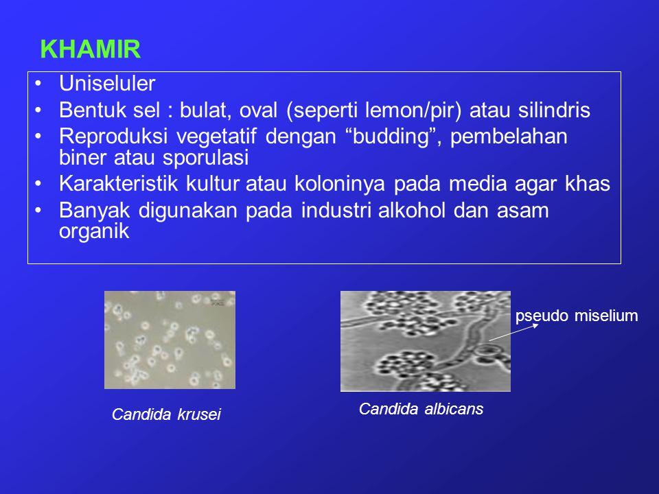 KHAMIR Uniseluler. Bentuk sel : bulat, oval (seperti lemon/pir) atau silindris.