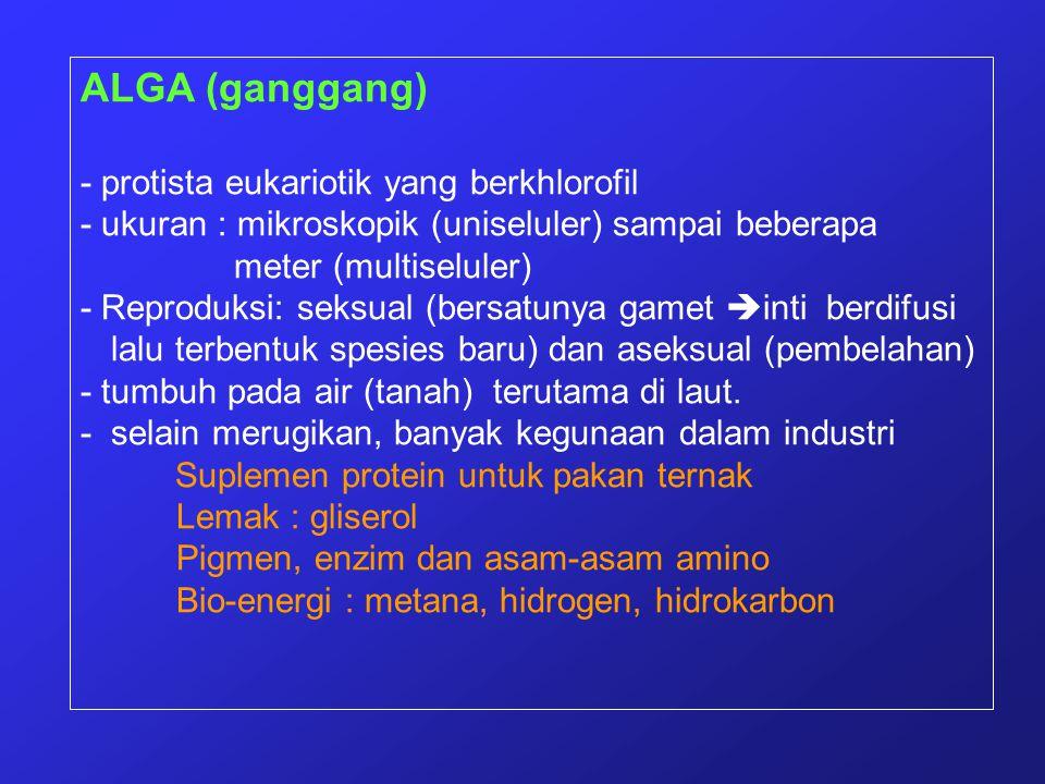 ALGA (ganggang) - protista eukariotik yang berkhlorofil