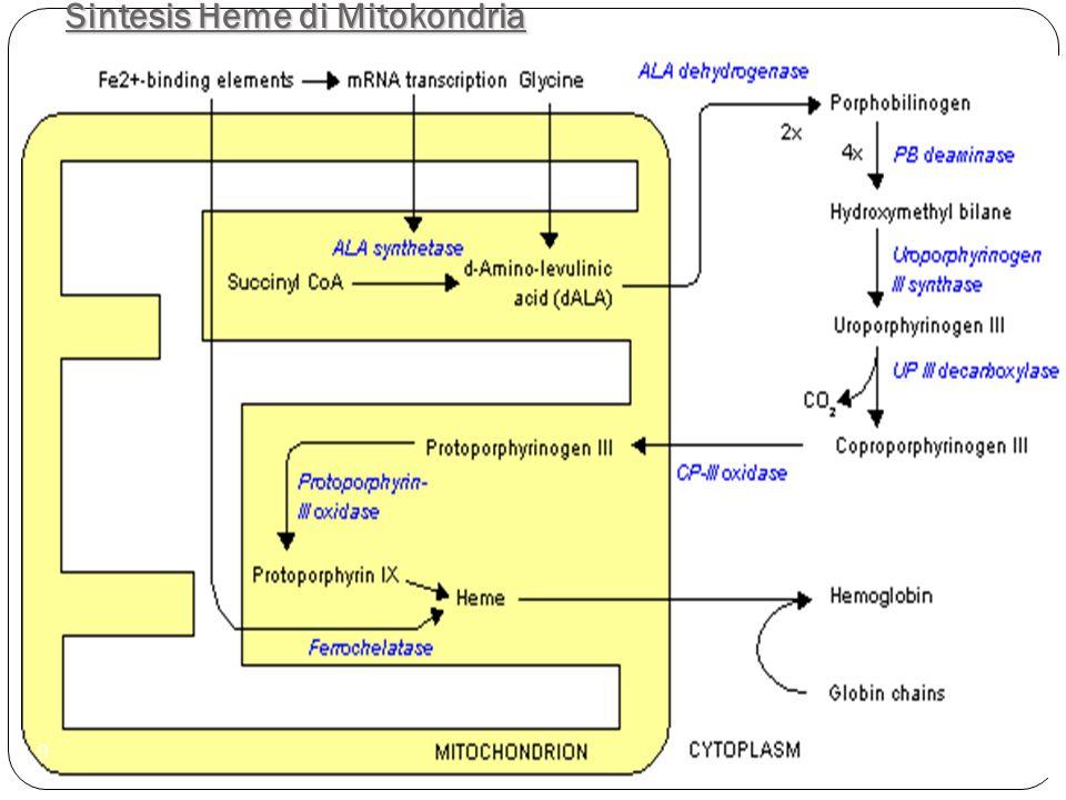 Sintesis Heme di Mitokondria