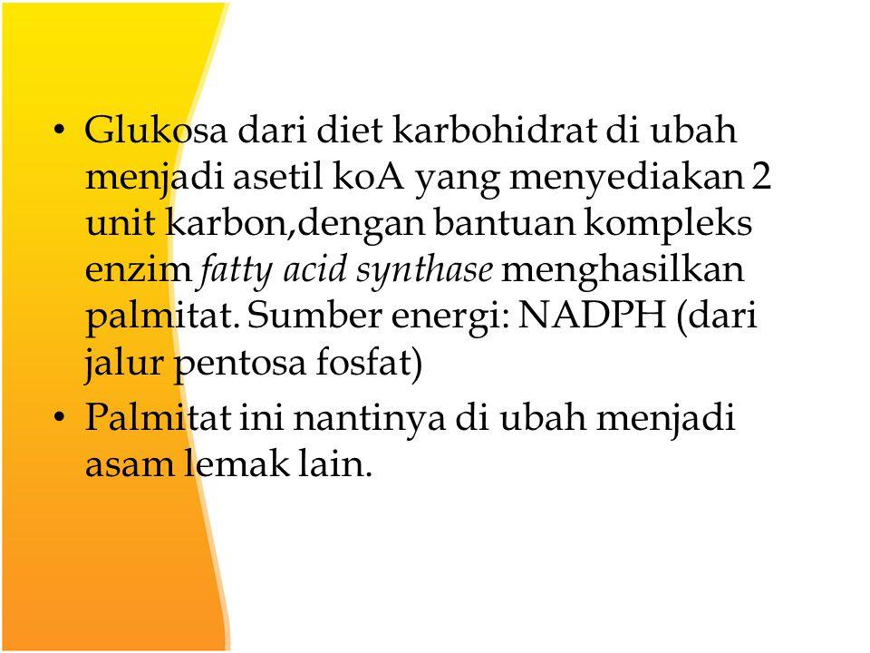 Glukosa dari diet karbohidrat di ubah menjadi asetil koA yang menyediakan 2 unit karbon,dengan bantuan kompleks enzim fatty acid synthase menghasilkan palmitat. Sumber energi: NADPH (dari jalur pentosa fosfat)