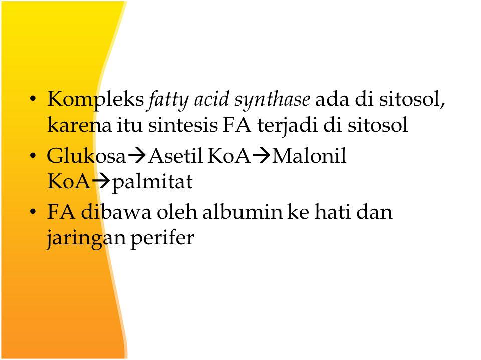 Kompleks fatty acid synthase ada di sitosol, karena itu sintesis FA terjadi di sitosol