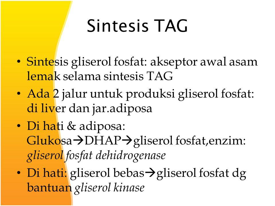 Sintesis TAG Sintesis gliserol fosfat: akseptor awal asam lemak selama sintesis TAG.