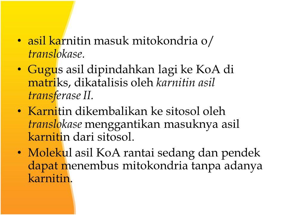 asil karnitin masuk mitokondria o/ translokase.
