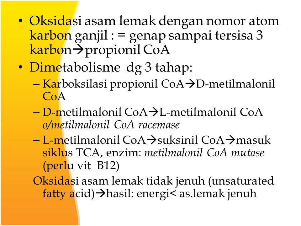 Dimetabolisme dg 3 tahap: