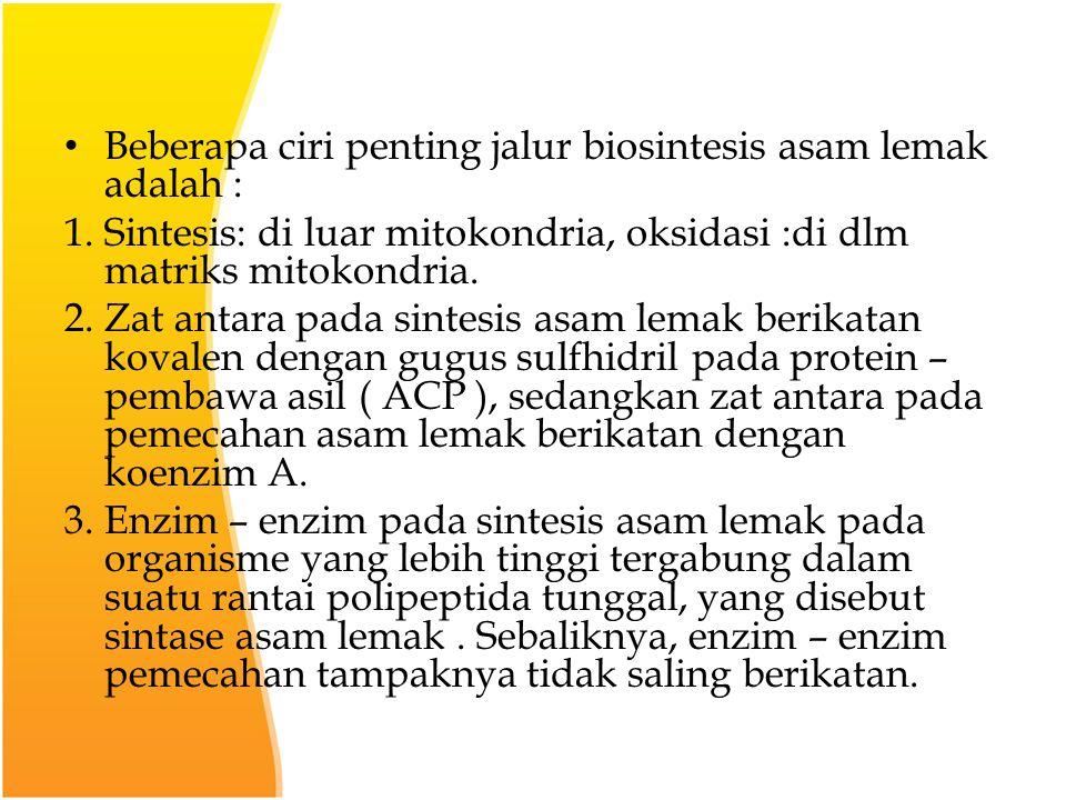 Beberapa ciri penting jalur biosintesis asam lemak adalah :