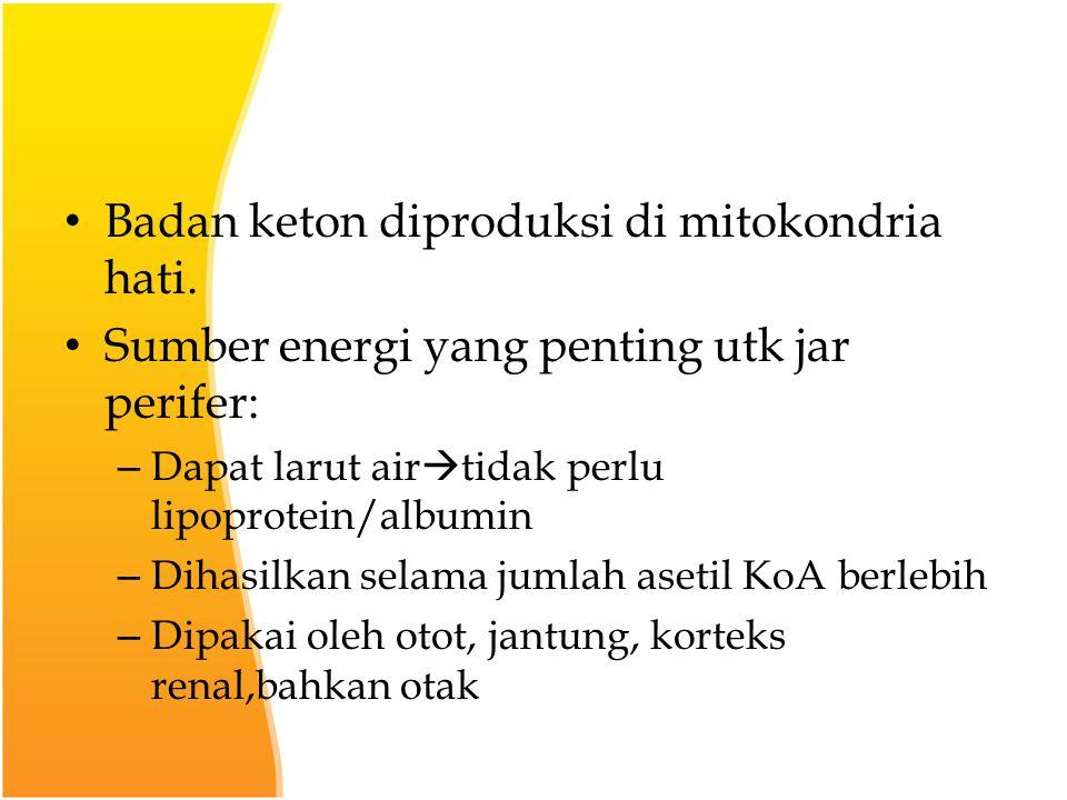 Badan keton diproduksi di mitokondria hati.