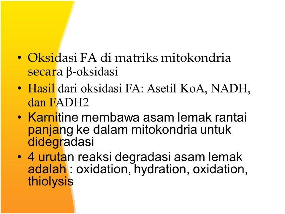 Oksidasi FA di matriks mitokondria secara β-oksidasi