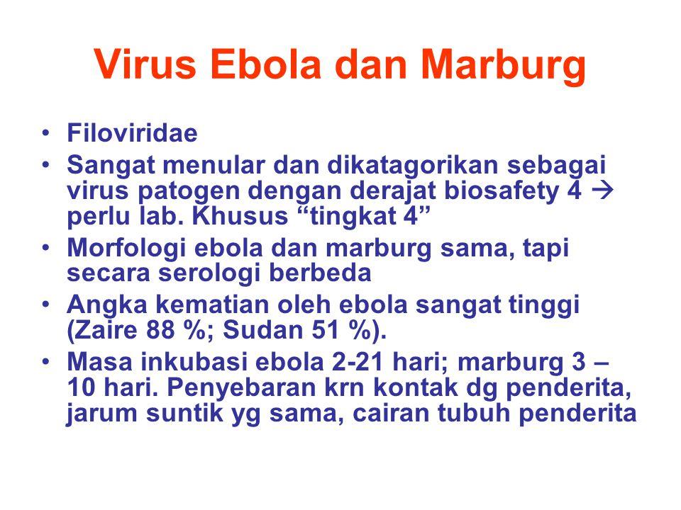 Virus Ebola dan Marburg