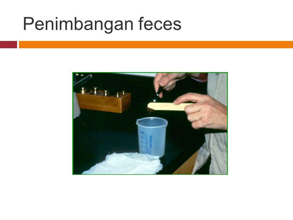 Penimbangan feces