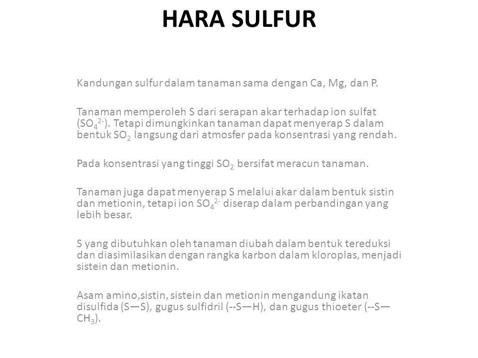 HARA SULFUR Kandungan sulfur dalam tanaman sama dengan Ca, Mg, dan P.