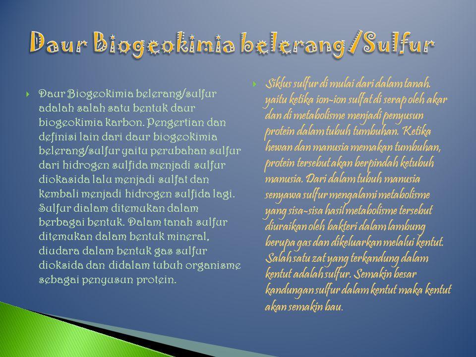 Daur Biogeokimia belerang/Sulfur