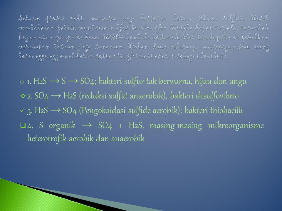 1. H2S → S → SO4; bakteri sulfur tak berwarna, hijau dan ungu