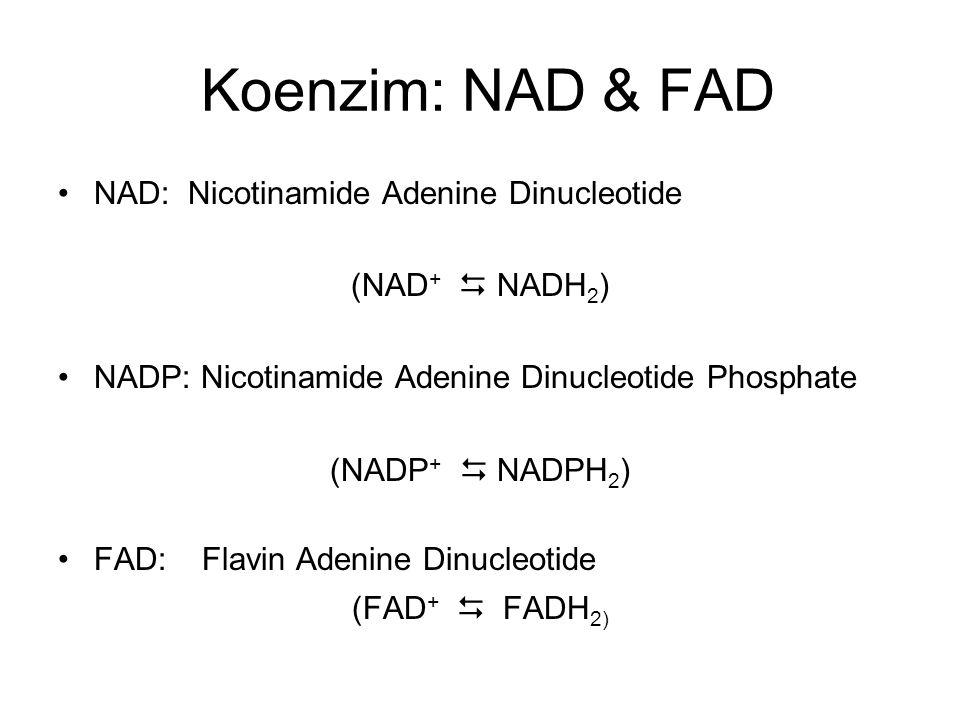 NAD and FAD Cofactors