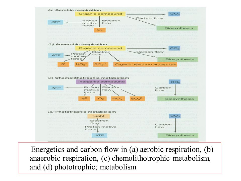 Energetics and carbon flow in (a) aerobic respiration, (b) anaerobic respiration, (c) chemolithotrophic metabolism, and (d) phototrophic; metabolism