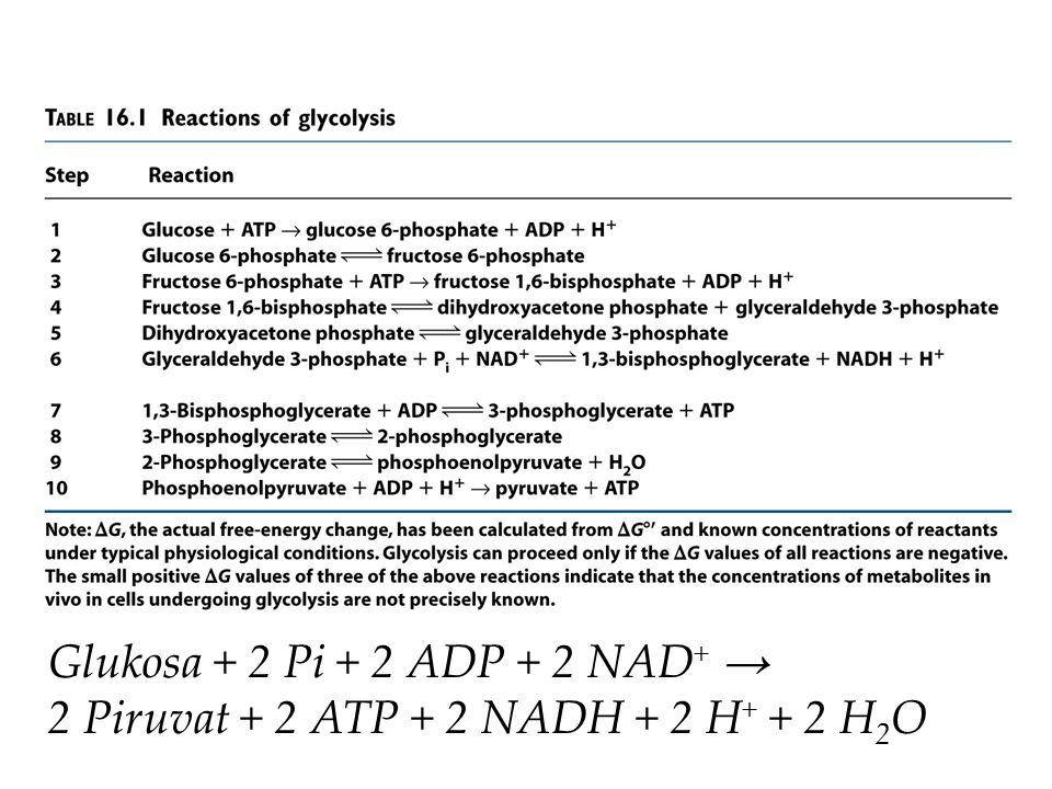 Glukosa + 2 Pi + 2 ADP + 2 NAD+ → 2 Piruvat + 2 ATP + 2 NADH + 2 H+ + 2 H2O