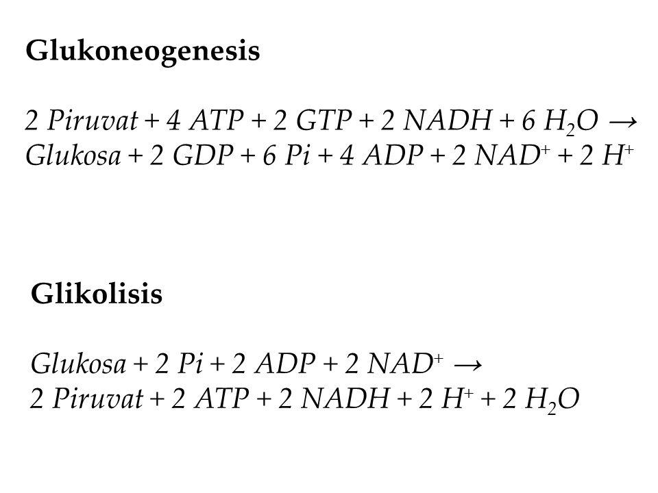 Glukoneogenesis 2 Piruvat + 4 ATP + 2 GTP + 2 NADH + 6 H2O → Glukosa + 2 GDP + 6 Pi + 4 ADP + 2 NAD+ + 2 H+
