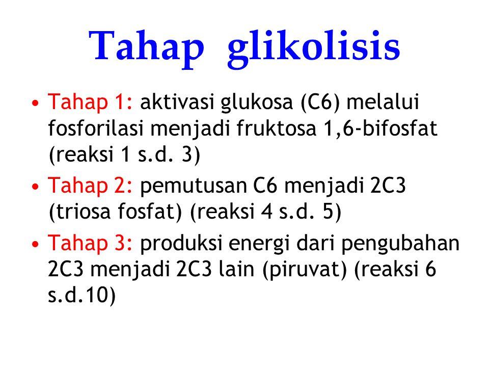Tahap glikolisis Tahap 1: aktivasi glukosa (C6) melalui fosforilasi menjadi fruktosa 1,6-bifosfat (reaksi 1 s.d. 3)