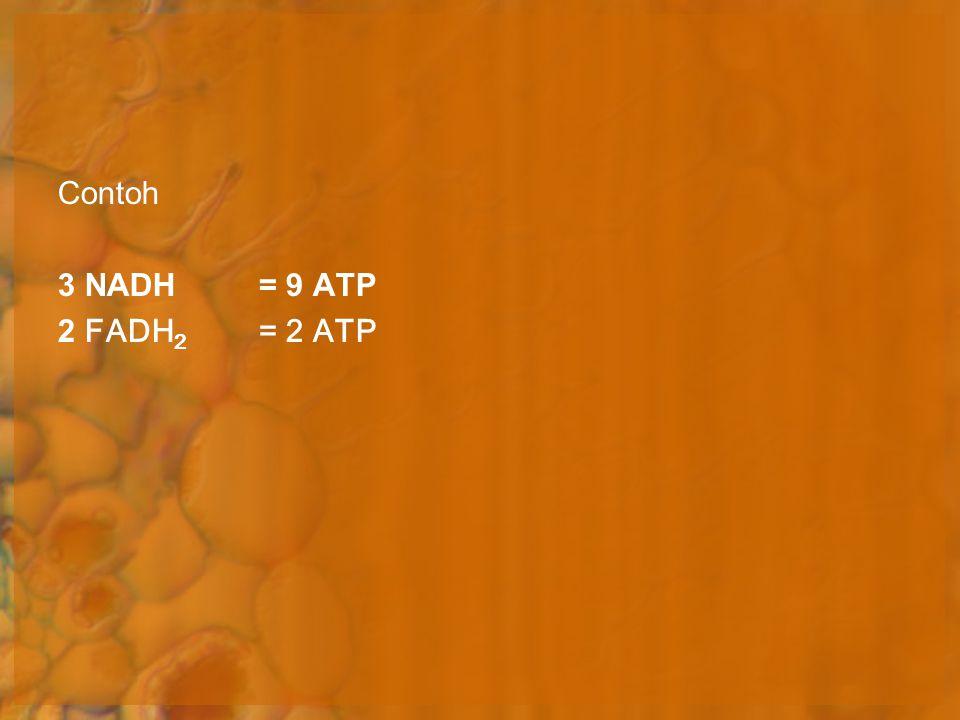 Contoh 3 NADH = 9 ATP 2 FADH2 = 2 ATP