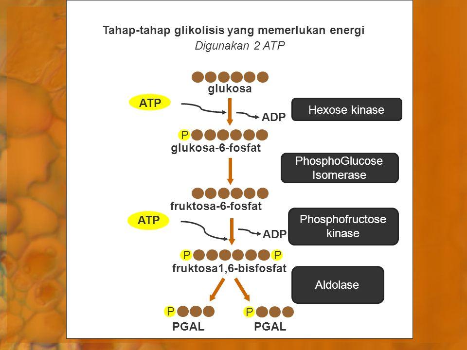 Tahap-tahap glikolisis yang memerlukan energi