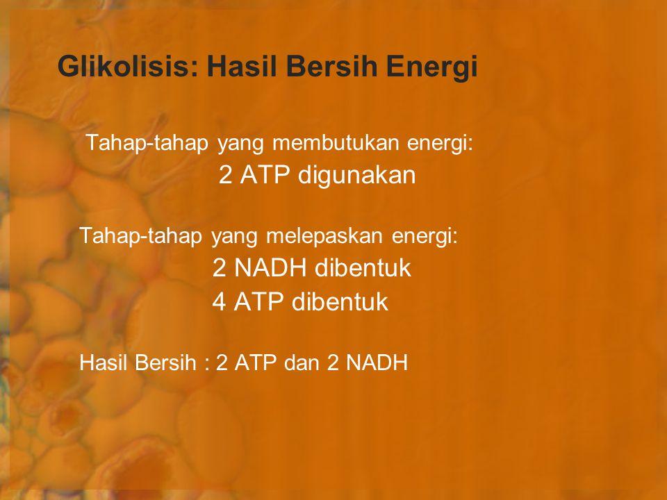 Glikolisis: Hasil Bersih Energi