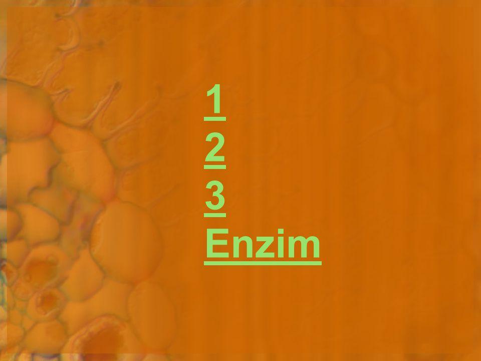 1 2 3 Enzim