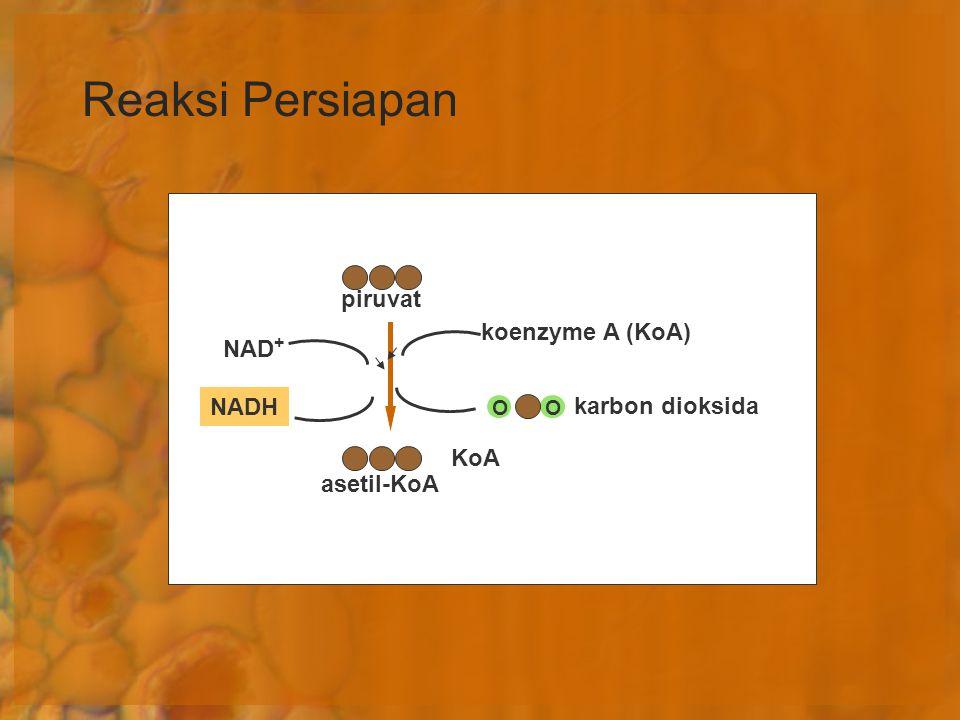 Reaksi Persiapan piruvat koenzyme A (KoA) NAD+ NADH karbon dioksida