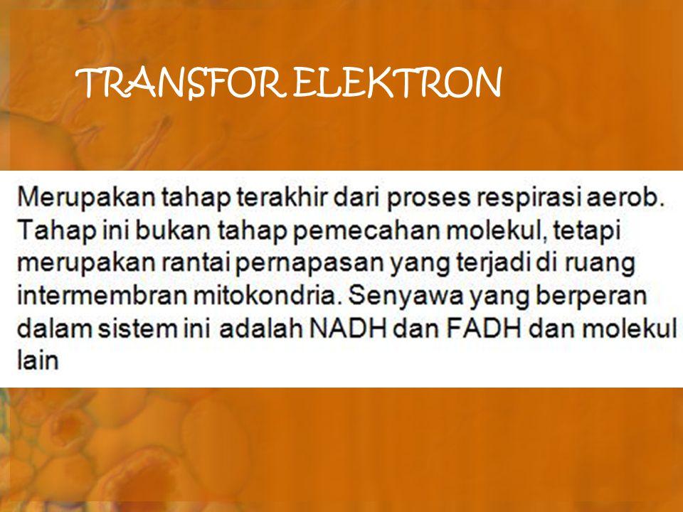 TRANSFOR ELEKTRON