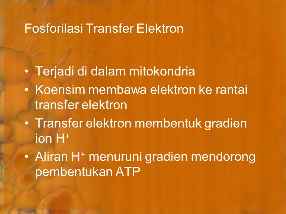 Fosforilasi Transfer Elektron