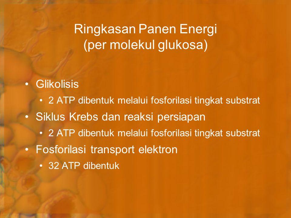 Ringkasan Panen Energi (per molekul glukosa)