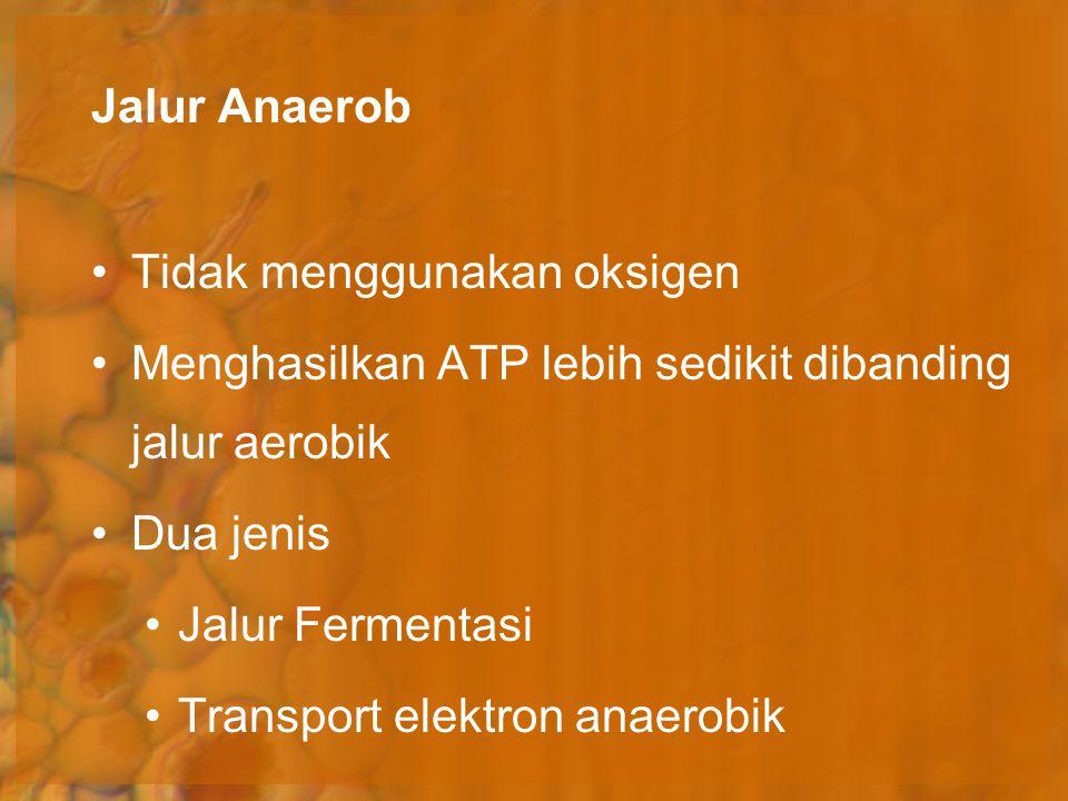 Jalur Anaerob Tidak menggunakan oksigen. Menghasilkan ATP lebih sedikit dibanding jalur aerobik. Dua jenis.