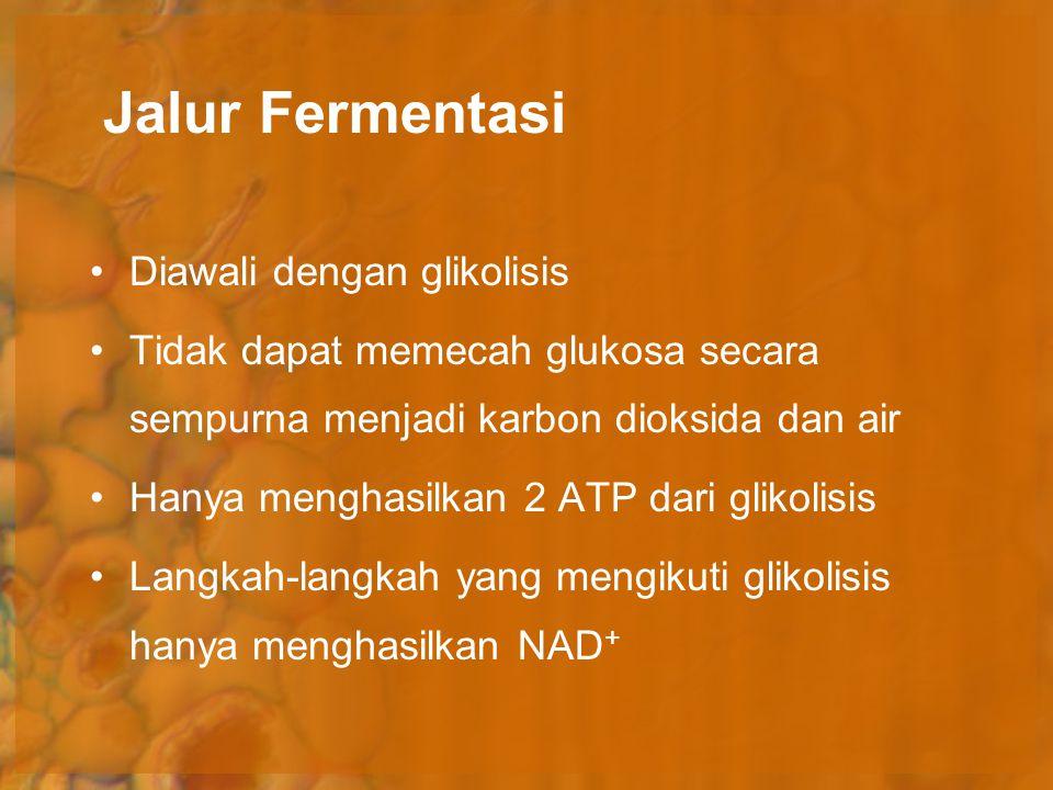 Jalur Fermentasi Diawali dengan glikolisis