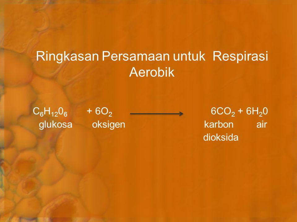 Ringkasan Persamaan untuk Respirasi Aerobik