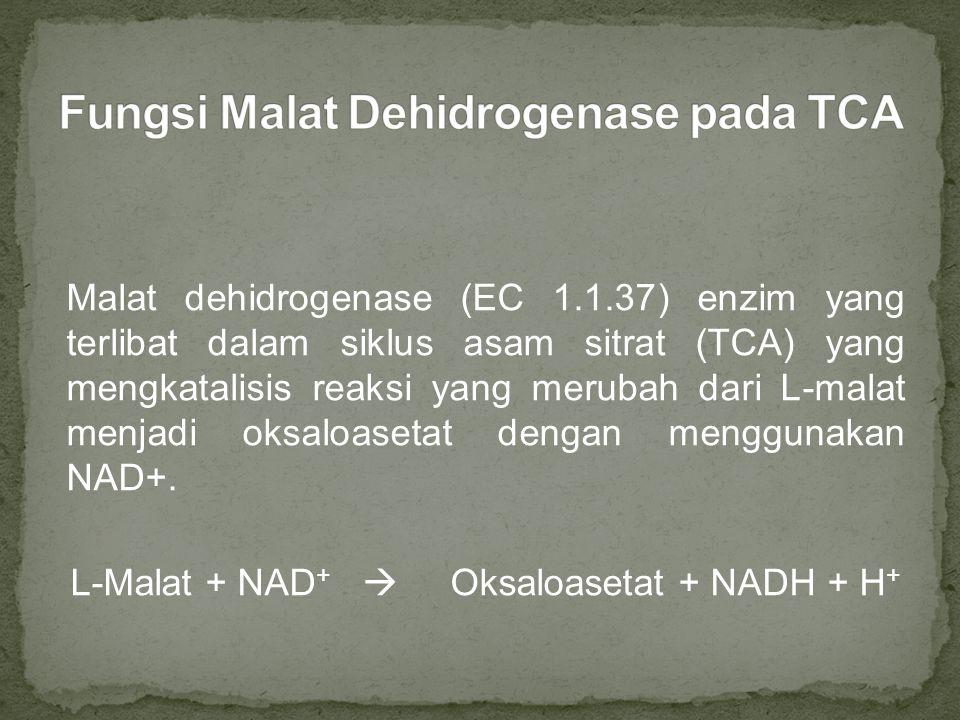 Fungsi Malat Dehidrogenase pada TCA