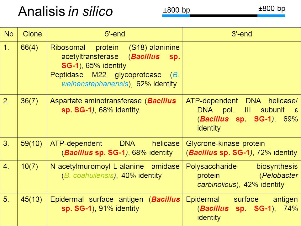 Analisis in silico ±800 bp No Clone 5'-end 3'-end 1. 66(4)