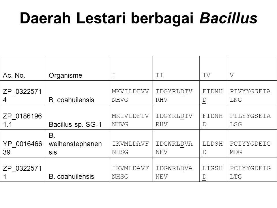 Daerah Lestari berbagai Bacillus