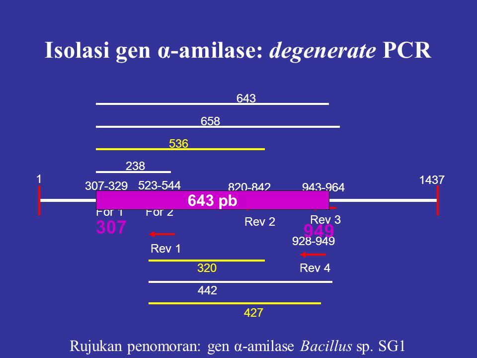 Rujukan penomoran: gen α-amilase Bacillus sp. SG1