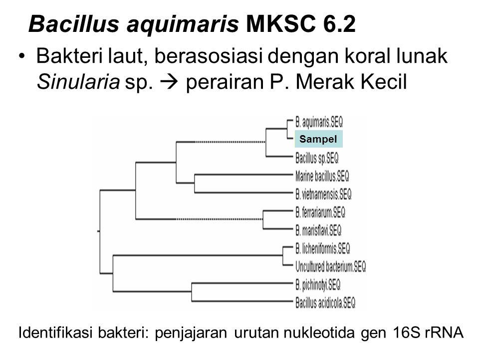 Bacillus aquimaris MKSC 6.2