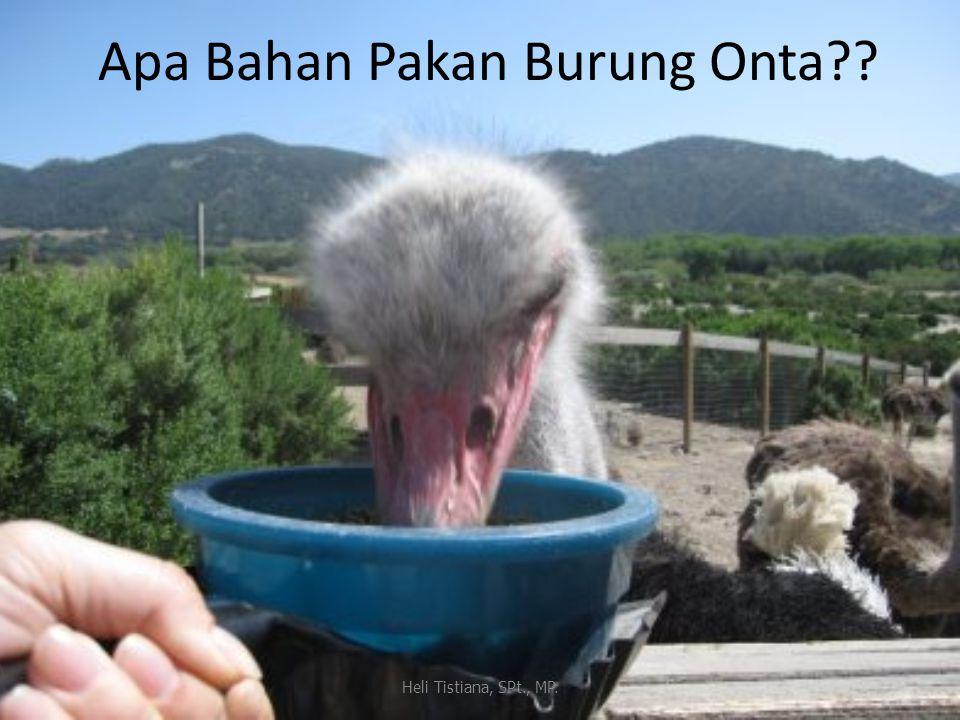 Apa Bahan Pakan Burung Onta