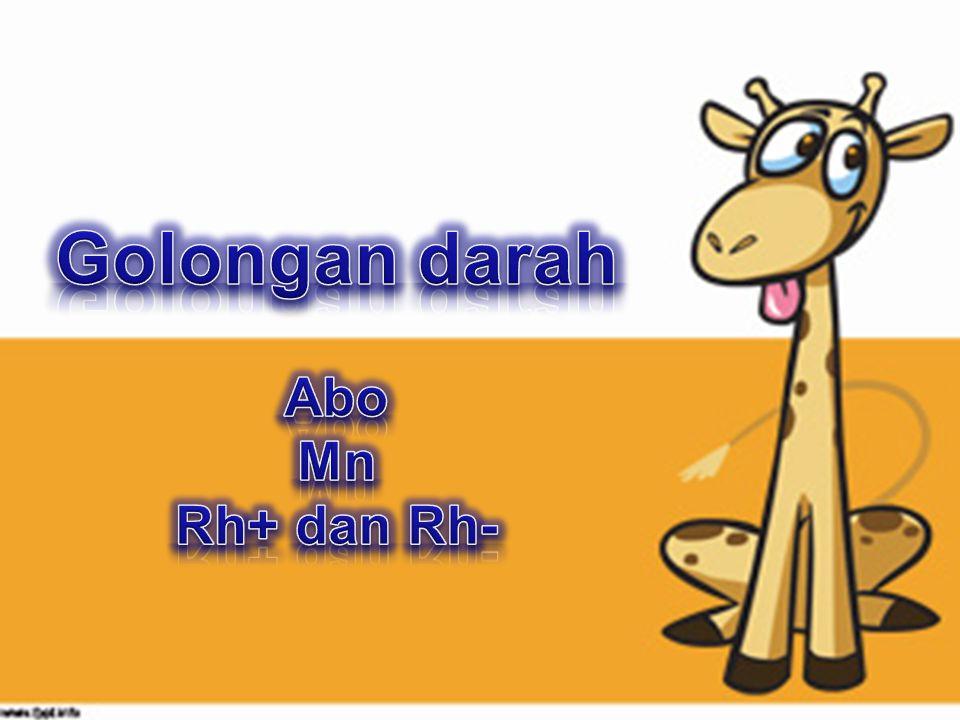 Golongan darah Abo Mn Rh+ dan Rh-