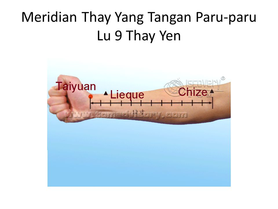 Meridian Thay Yang Tangan Paru-paru Lu 9 Thay Yen