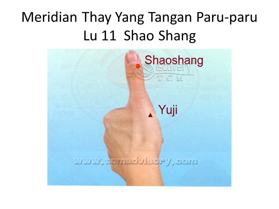 Meridian Thay Yang Tangan Paru-paru Lu 11 Shao Shang
