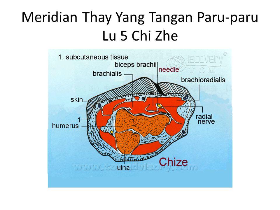 Meridian Thay Yang Tangan Paru-paru Lu 5 Chi Zhe