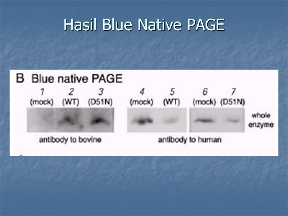 Hasil Blue Native PAGE
